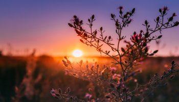 zachód słońca z łąką