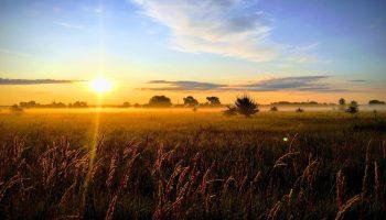 wschód słońca nad polami