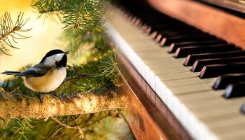ptak na gałęzi i pianino